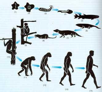 (Significado de la vida. Evolución de las especies.)