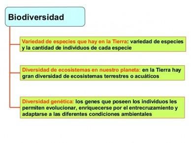 (Tipos de biodiversidad.)