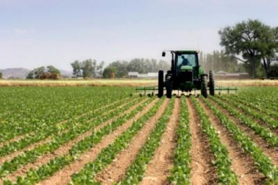 (La agricultura está orientada a la producción de alimentos)